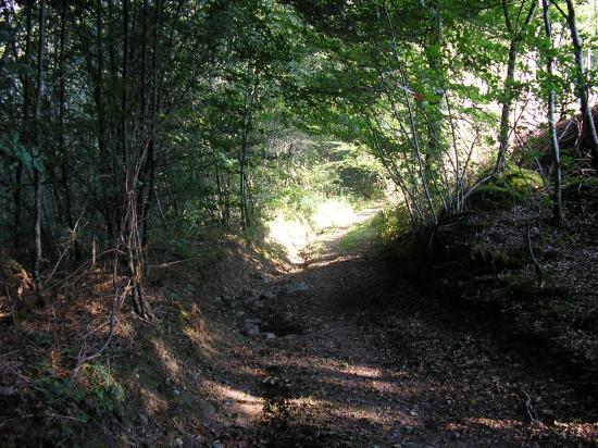 PARCOURS LA MADICOISE 11 KM